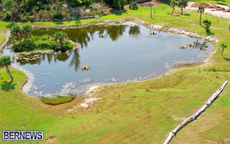 FLOWERS IN POND_Eves Pond Hamilton Parish Bermuda 2021 (1)